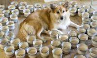 En skuffet hund