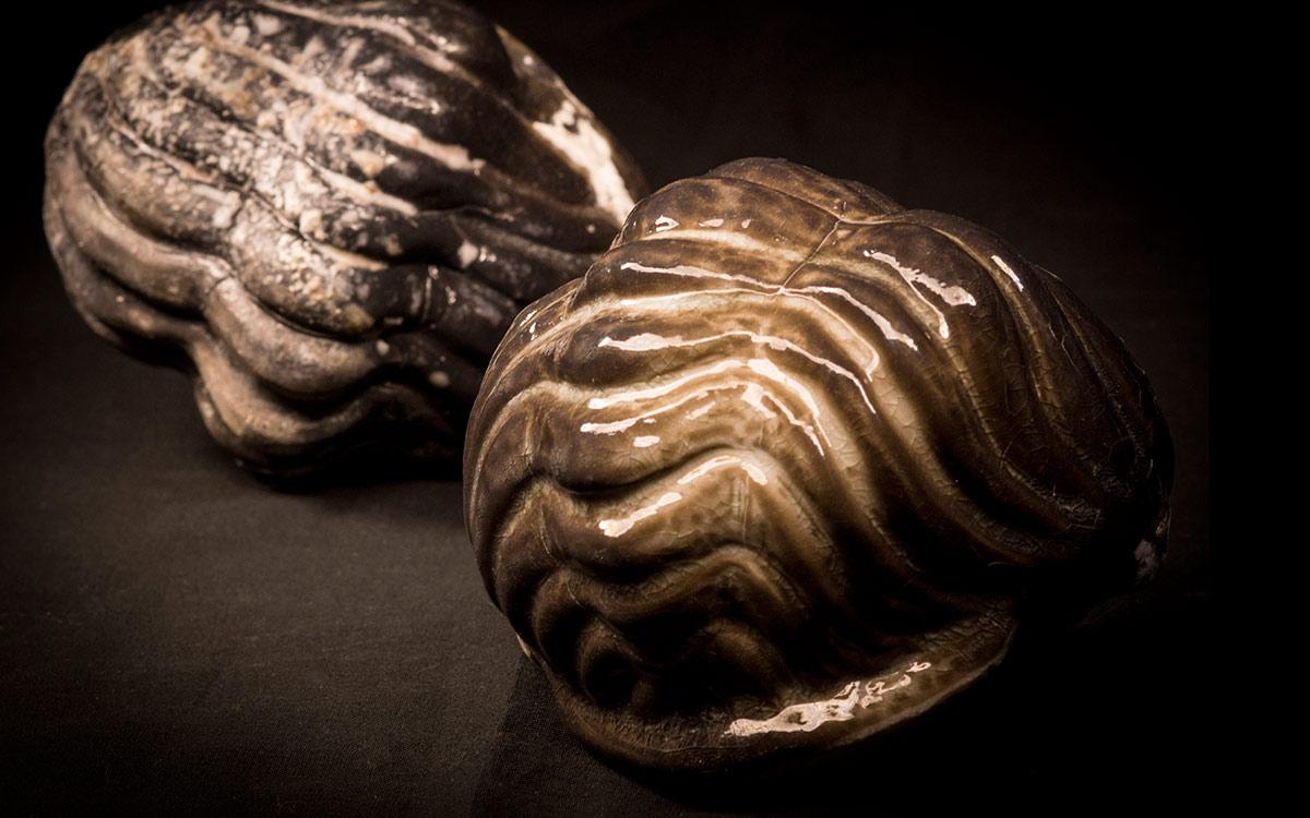 Trilobit04